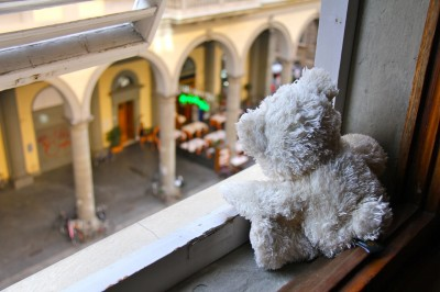 Teddy looking out of his apartment window in Florence