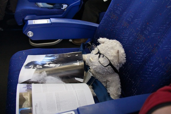Teddy enjoys reading between destinations