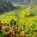 Lush green valleys, Bali