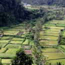 Beautiful green farm fields, Bali
