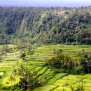 Beautiful green farms, Bali