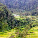 Lush green valleys of Bali