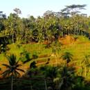 Terraced farms, Bali