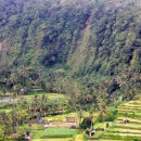 Lush green valleys, Bali