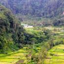 Lush green valleys of Bali